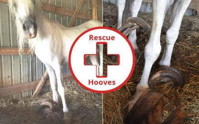 Rescue Hooves