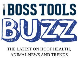 Bos sTools Buzz