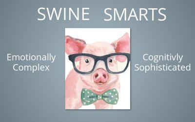 Swine Smarts