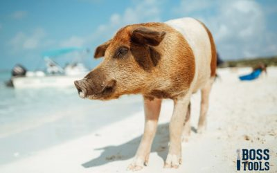 Fun Facts About Domestic Pigs